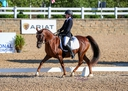 Ikia Q in  Horses For Sale