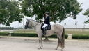 Electra CDF in  Horses For Sale