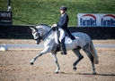 Morfeo BRH in  Horses For Sale