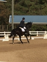HPB Wispen  in  Horses For Sale