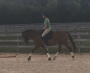 Noblesse  in  Horses For Sale