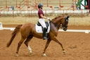 Cartier in  Horses For Sale