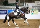 EUROPEAN DRESSAGE HORSES in  Directory Barn