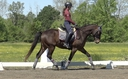 Kinetic MLF in  Horses For Sale