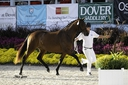 Margot ISF in  Horses For Sale