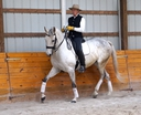 Escocero in  Horses For Sale