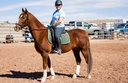 A Green Acres Fabius in  Horses For Sale