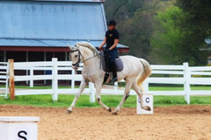 Amadeo III in Dressage Horses For Sale DressageMarket.com