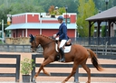 Limitless in  Horses For Sale