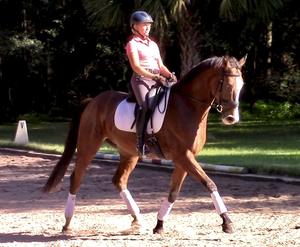 Fury H in Dressage Horses For Sale DressageMarket.com