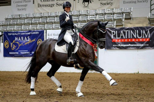 GAMARRO in Dressage Horses For Sale DressageMarket.com