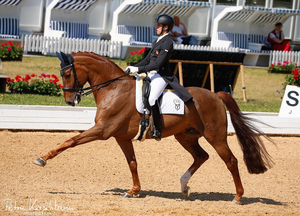 Furst fiorano Ymas in Dressage Horses For Sale DressageMarket.com