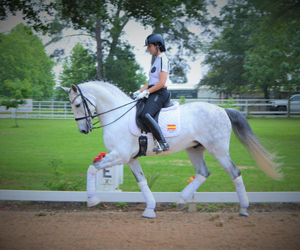 KELIO in Dressage Horses For Sale DressageMarket.com
