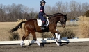 Kinetic in  Horses For Sale