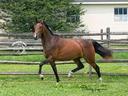 Oceana ISF in  Horses For Sale