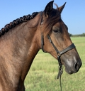 Sugarfina in  Horses For Sale