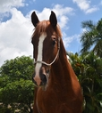 Olympio in  Horses For Sale